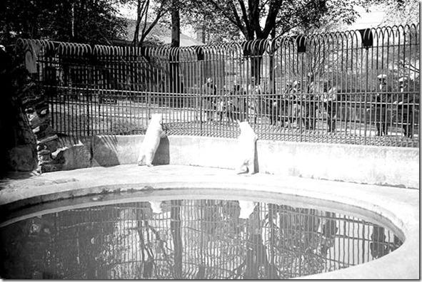 F 1231, Fl.1231, It. 0467 May 26, 1926.  -Riverdale-PolarBears[1]