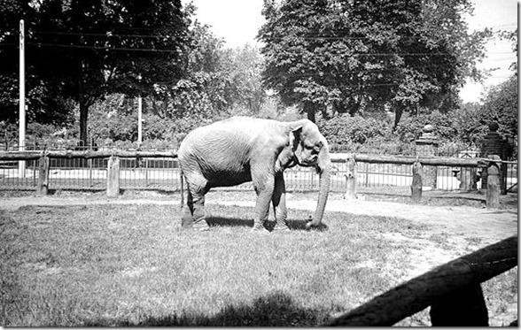 F1244,  item 0555   Riverdale-Elephant-Alr[1]