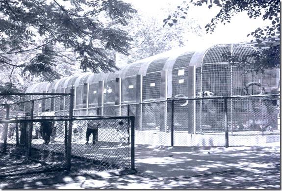 monkey enclosure, 1955  pictures-r-1126[1]
