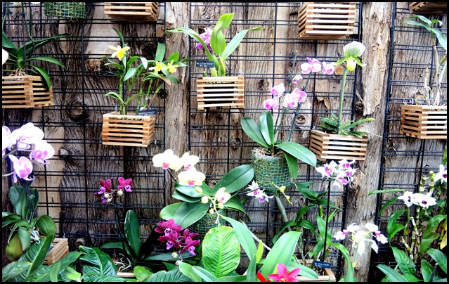 orchid wall in sw gr. house